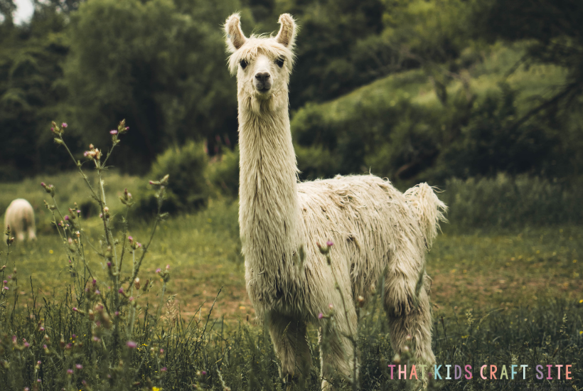 Llama Crafts for Kids